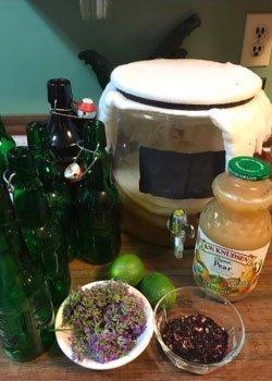 Kombucha & Fire Cider Tonics